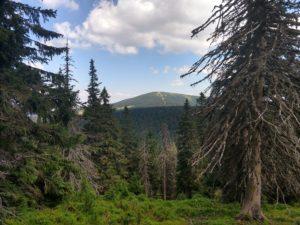 Śnieżnik – najwyższy szczyt Sudetów Wschodnich. Opis szlaków, atrakcje, wycieczka na Śnieżnik.