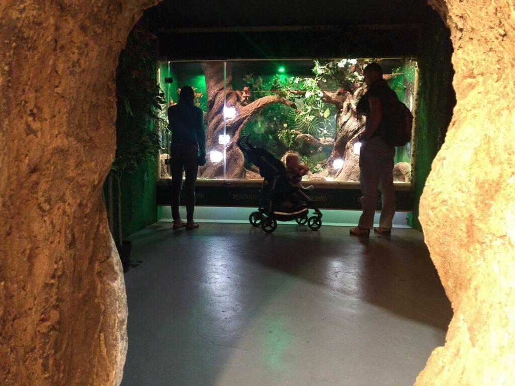 Zwiedzanie Myszogrodu
